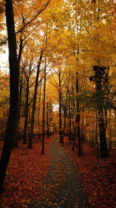 autumn,trees,pretty colors,leaves,fall