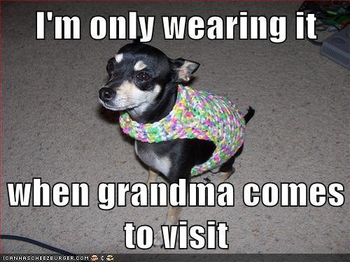 dogs,grandma,sweater,chihuahua,embarrsing