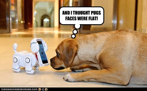 AND I THOUGHT PUGS FACES WERE FLAT!