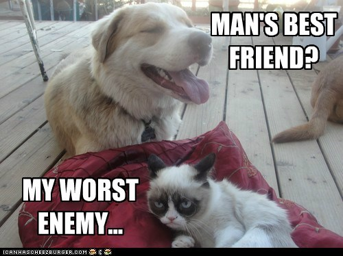 Happy Dog Meets Grumpy Cat