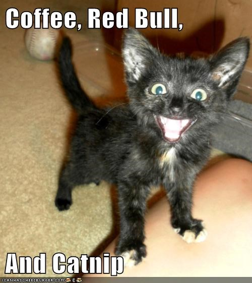 Coffee, Red Bull,   And Catnip