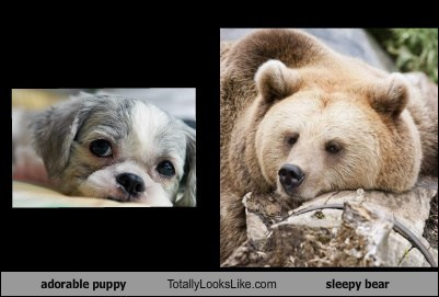 adorable puppy Totally Looks Like sleepy bear