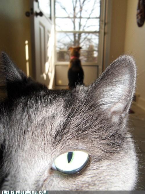 whatcha doin,cat,pets,close up