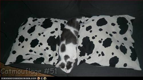 Catmouflage #51