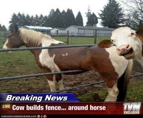 Breaking News - Cow builds fence... around horse