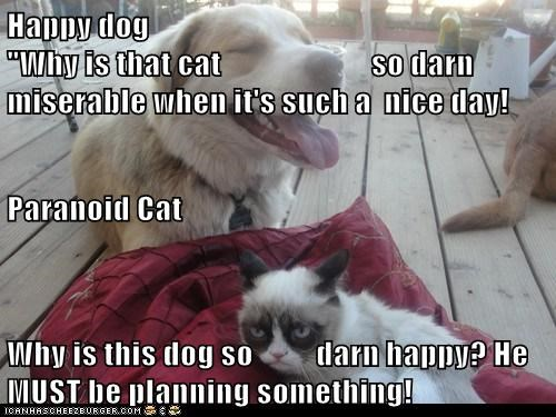 "Happy dog                                                                                                                                                                    ""Why is that cat                        so darn miserable when it's such a  nice d"