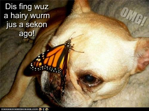 dogs,surprise,butterfies,metamorphosis,worm,caterpillar