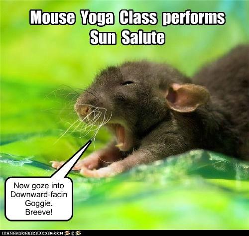 class,pose,lolspeak,sun,breathe,yoga,mouse