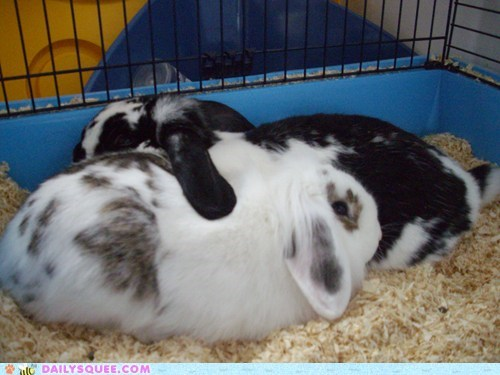 Bunnies snuggling