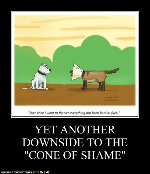 "YET ANOTHER DOWNSIDE TO THE ""CONE OF SHAME"""