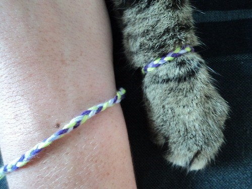 paws,friendship,arms,friends,bracelets,Cats,friendship bracelets
