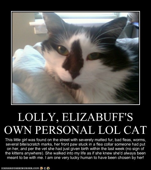 LOLLY, ELIZABUFF'S OWN PERSONAL LOL CAT