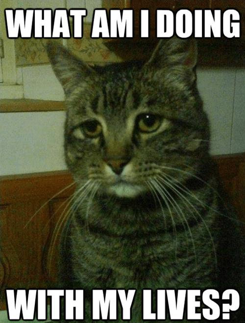 Depressed Cat is Depressed