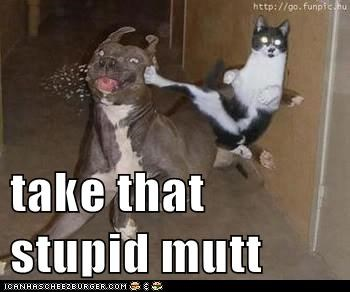 take that stupid mutt