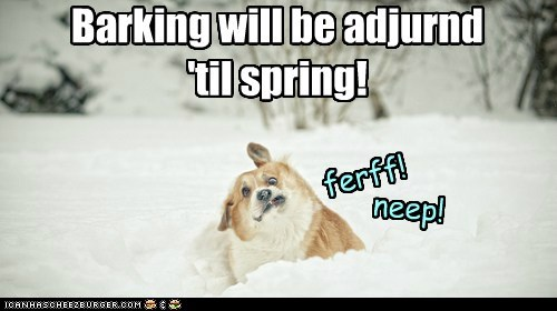 dogs,snow,barking,cold,corgi,winter,frozen