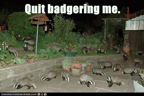 Quit badgering me.