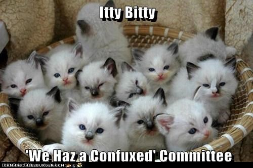 Itty Bitty   'We Haz a Confuxed' Committee