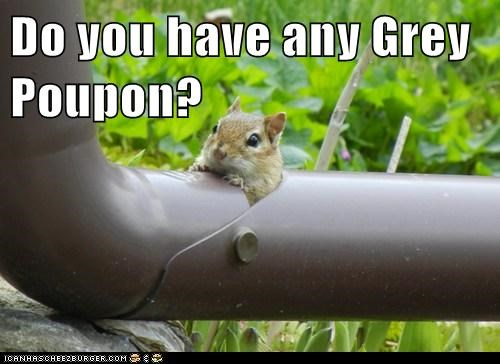 Do you have any Grey Poupon?