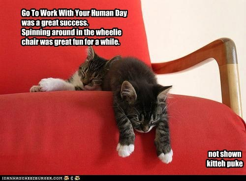 Go To Work With Your Human Day was a great success. Spinning around in the wheelie chair was great fun for a while.