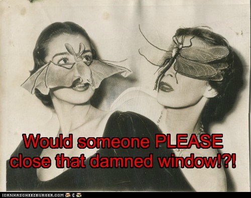 Would someone PLEASE close that damned window!?!