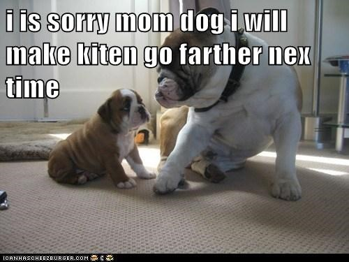 i is sorry mom dog i will make kiten go farther nex time