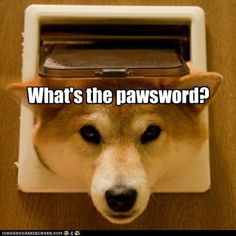 dogs,guard dog,password,doggy door,shiba inu