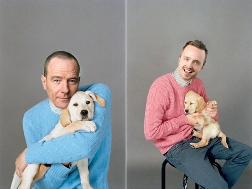 dogs,breaking bad,walter white,celeb,golden lab,jesse pinkman,puppy