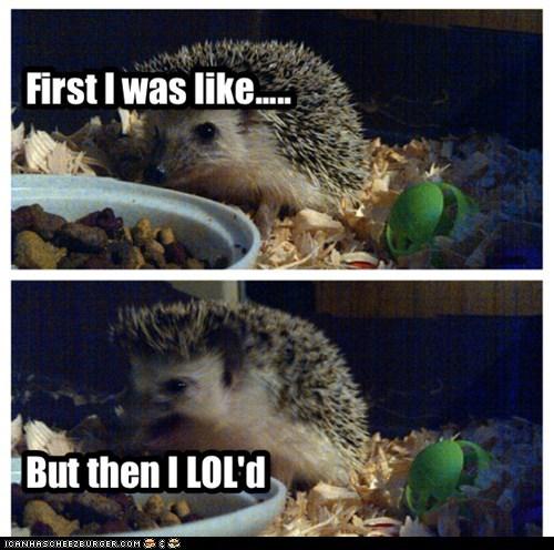 First I was like.....