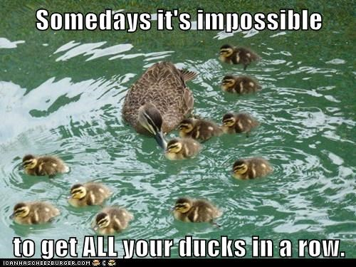 some days,impossible,ducklings,ducks,saying
