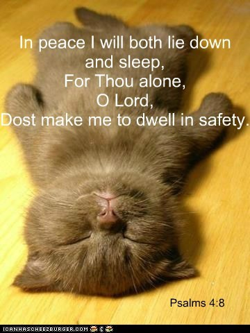God bless the kitties!