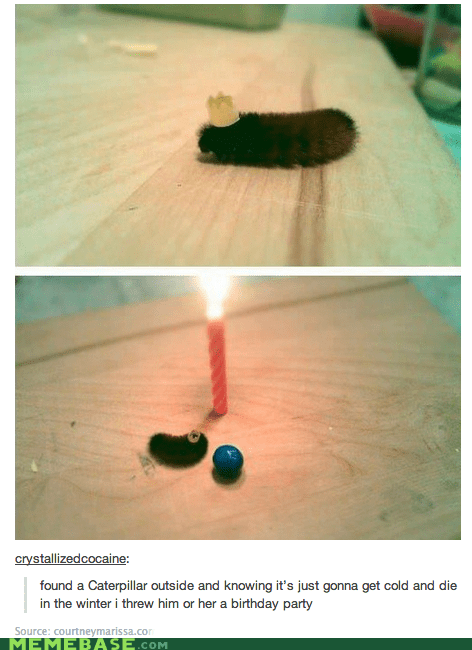 so cute,birthday party,so sad,caterpillar