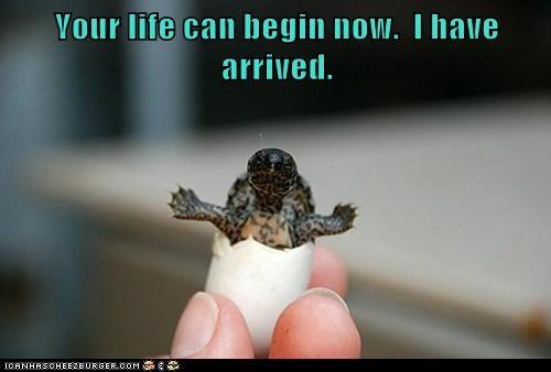 life,baby,arrived,me,turtles,egotistical,ta da,hatched,egg