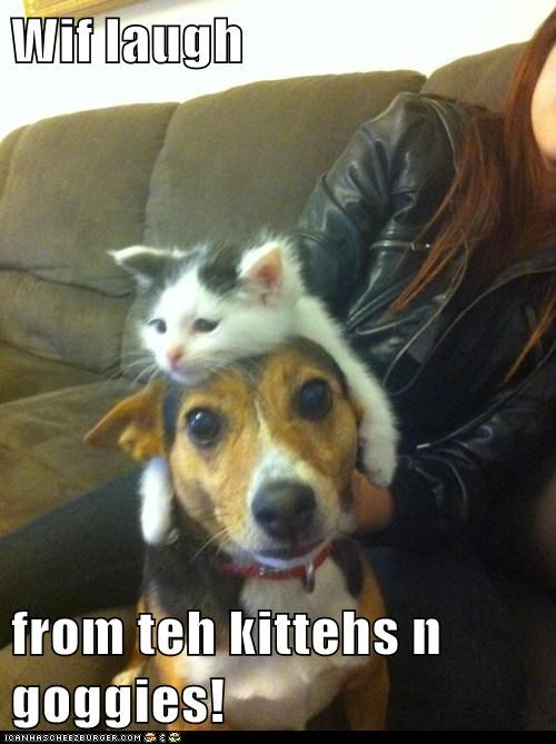 Wif laugh  from teh kittehs n goggies!