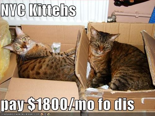 NYC Kittehs  pay $1800/mo fo dis