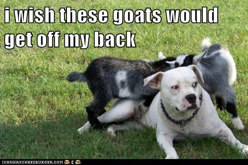 i wish these goats would get off my back