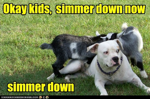 rough housing,dogs,pun,kids,goats,boxer