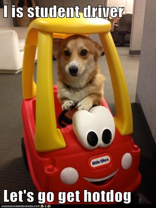I is student driver  Let's go get hotdog