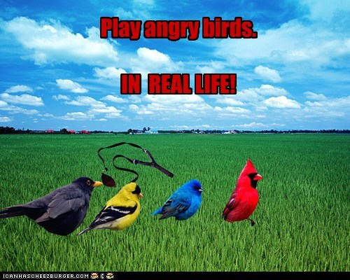 Play angry birds.   IN  REAL LIFE!
