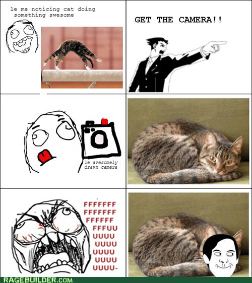 pets,Cats,fu guy,spiderpman