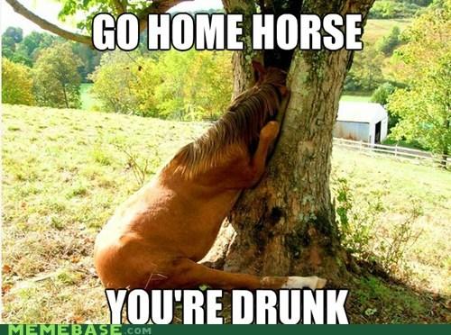 horse staph