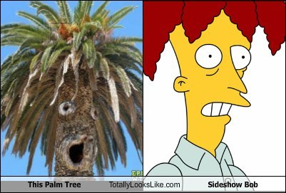 This Palm Tree Totally Looks Like Sideshow Bob