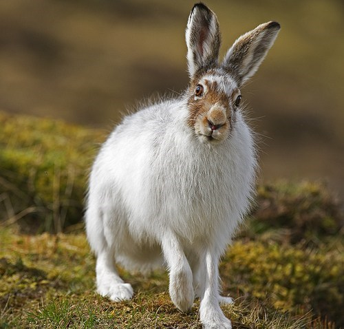 hare,creepicute,red eyes,rabbit,squee