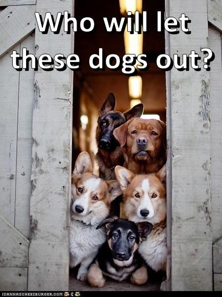 dogs,who let the dogs out,corgi,baha men,barn