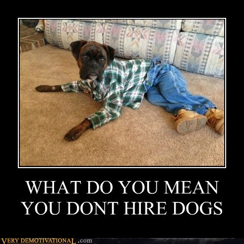 WHAT DO YOU MEAN YOU DONT HIRE DOGS