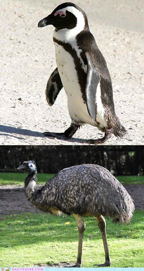 Squee Spree: Penguin vs. Emu