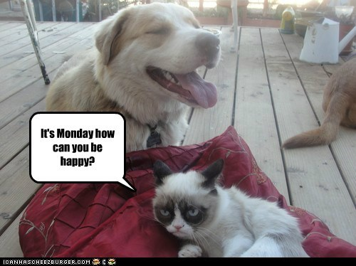 Grumpy cat is sick of Happy dog.