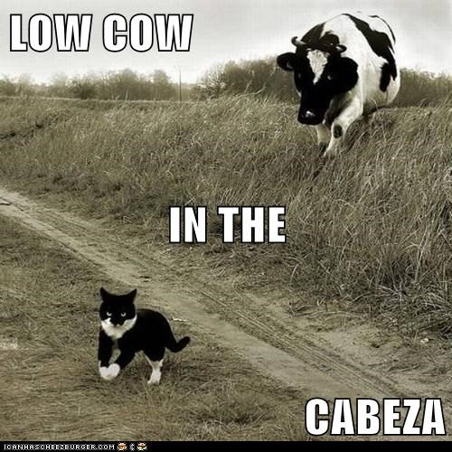 LOW COW IN THE CABEZA