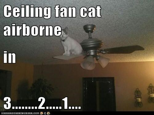 Ceiling fan cat airborne in 3........2.....1....