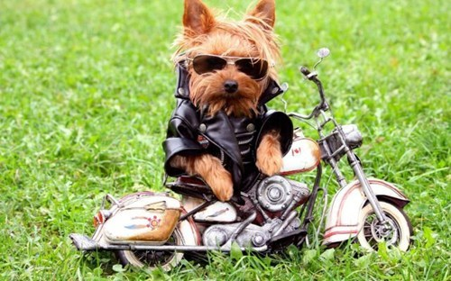 leather jacket,motorcycles,puuppies