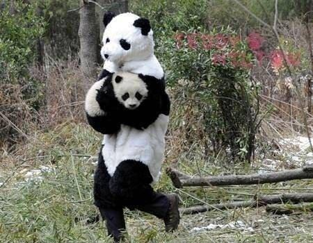 Don't Mind Me... Just a Panda